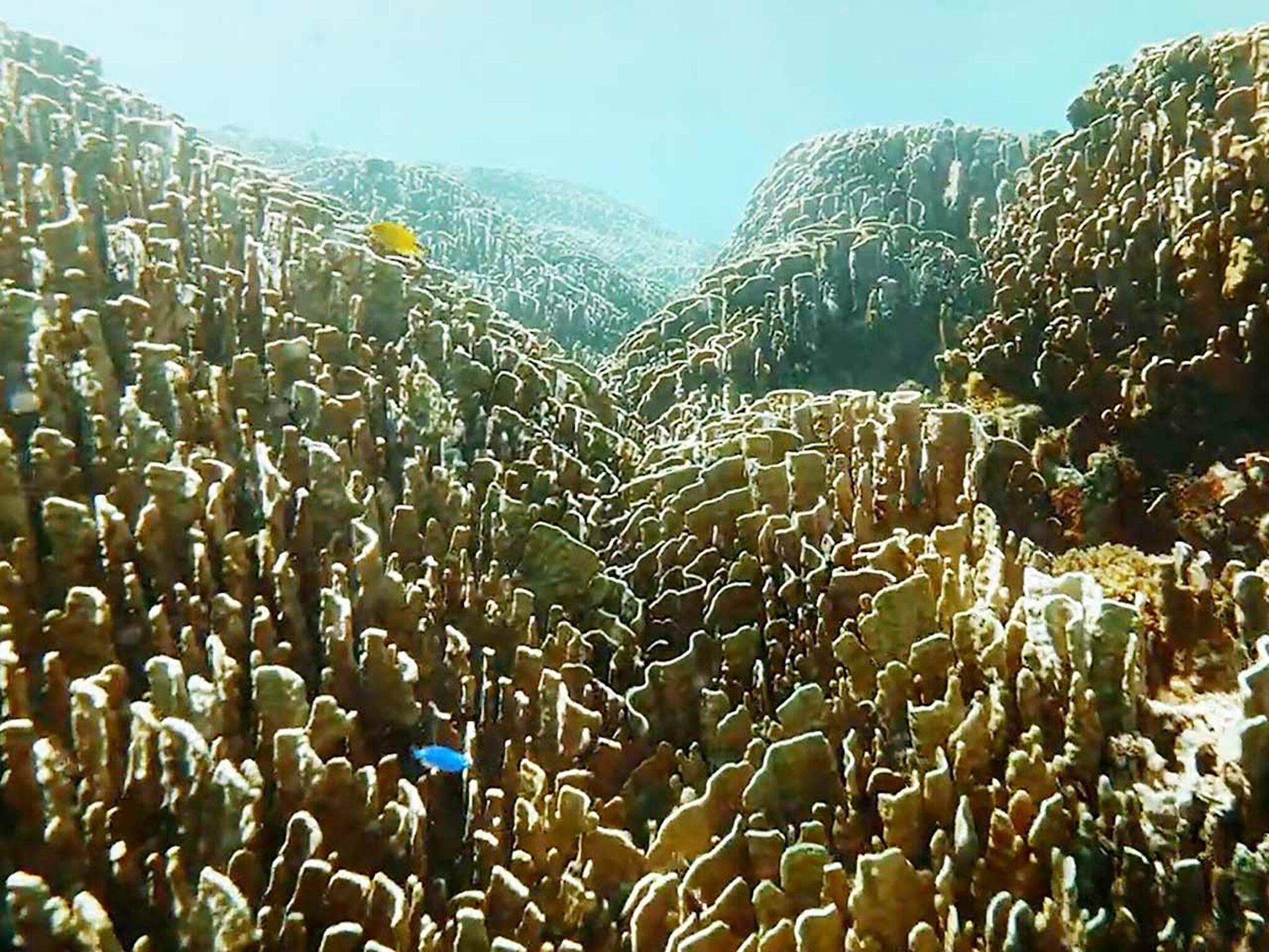 サンゴ礁の画像