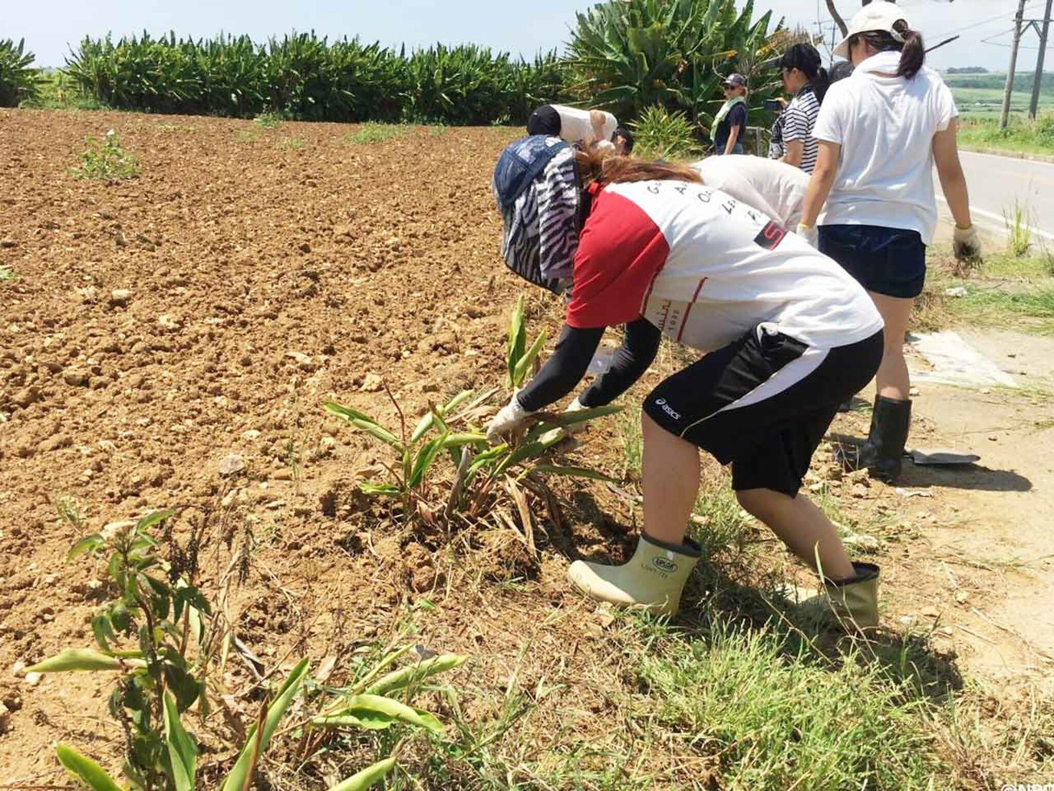 子どもたちが畑を耕している画像
