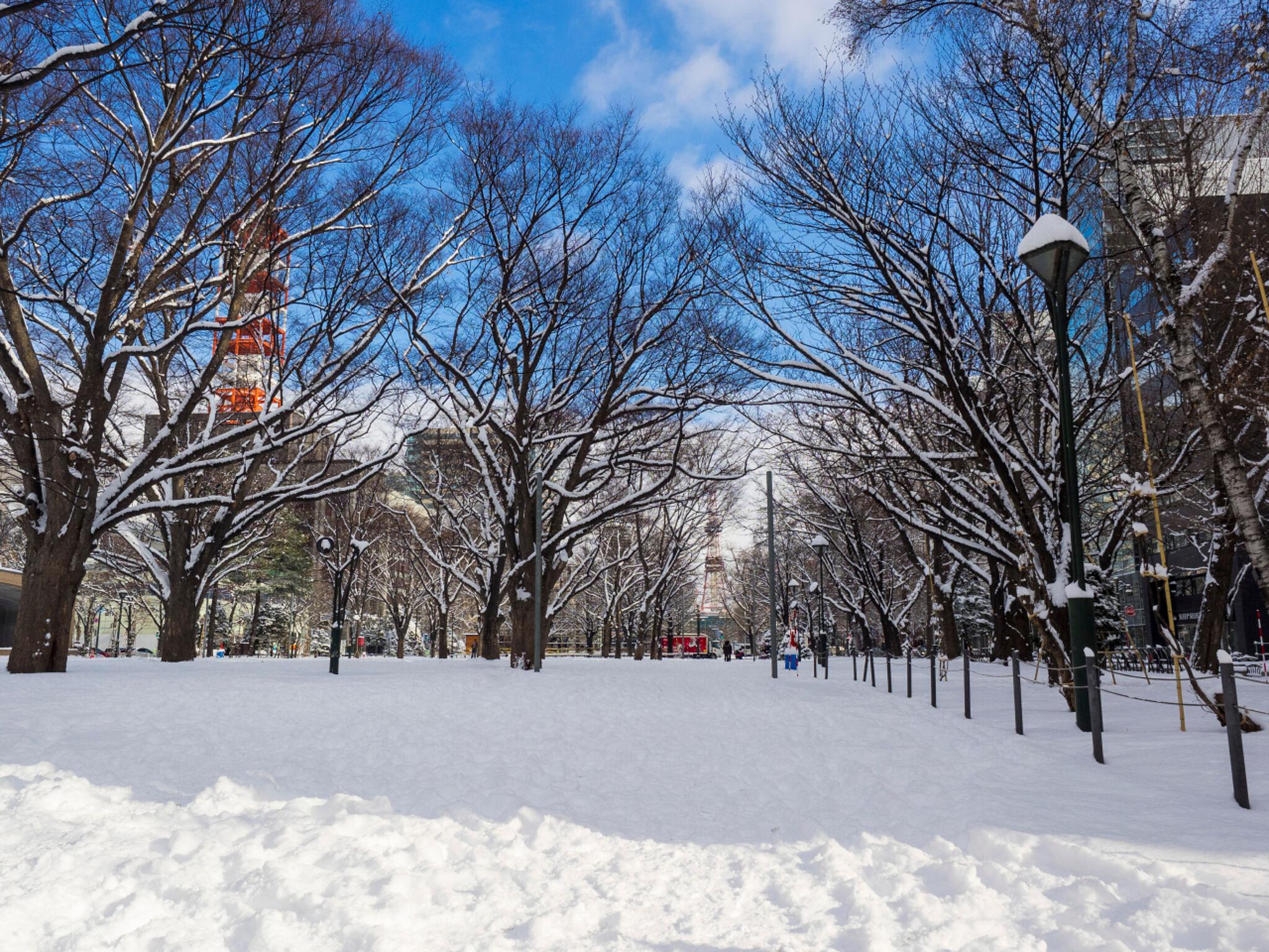 雪が積もった札幌市の街の画像