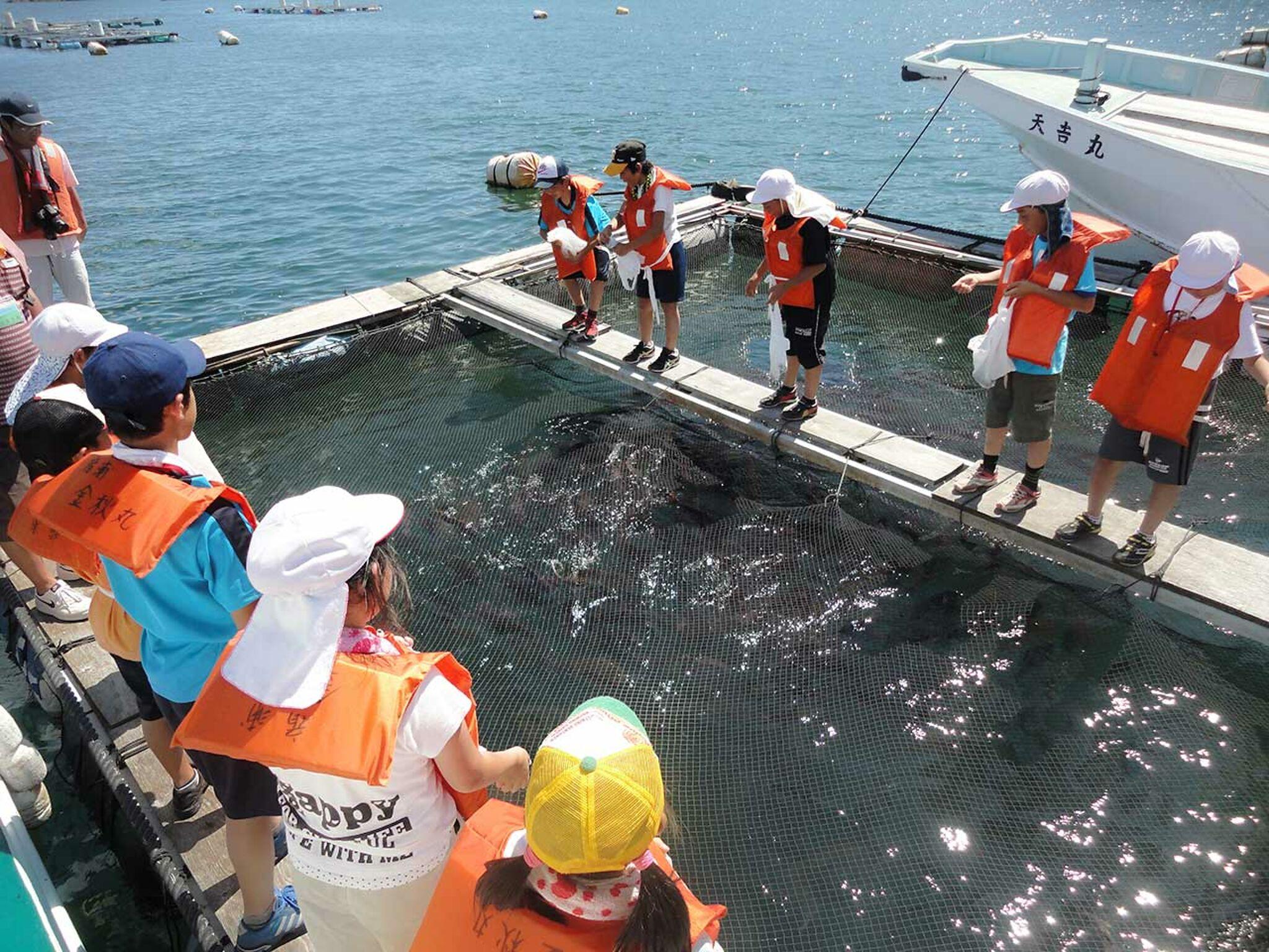 子どもたちが鯛の餌やり体験をしている画像