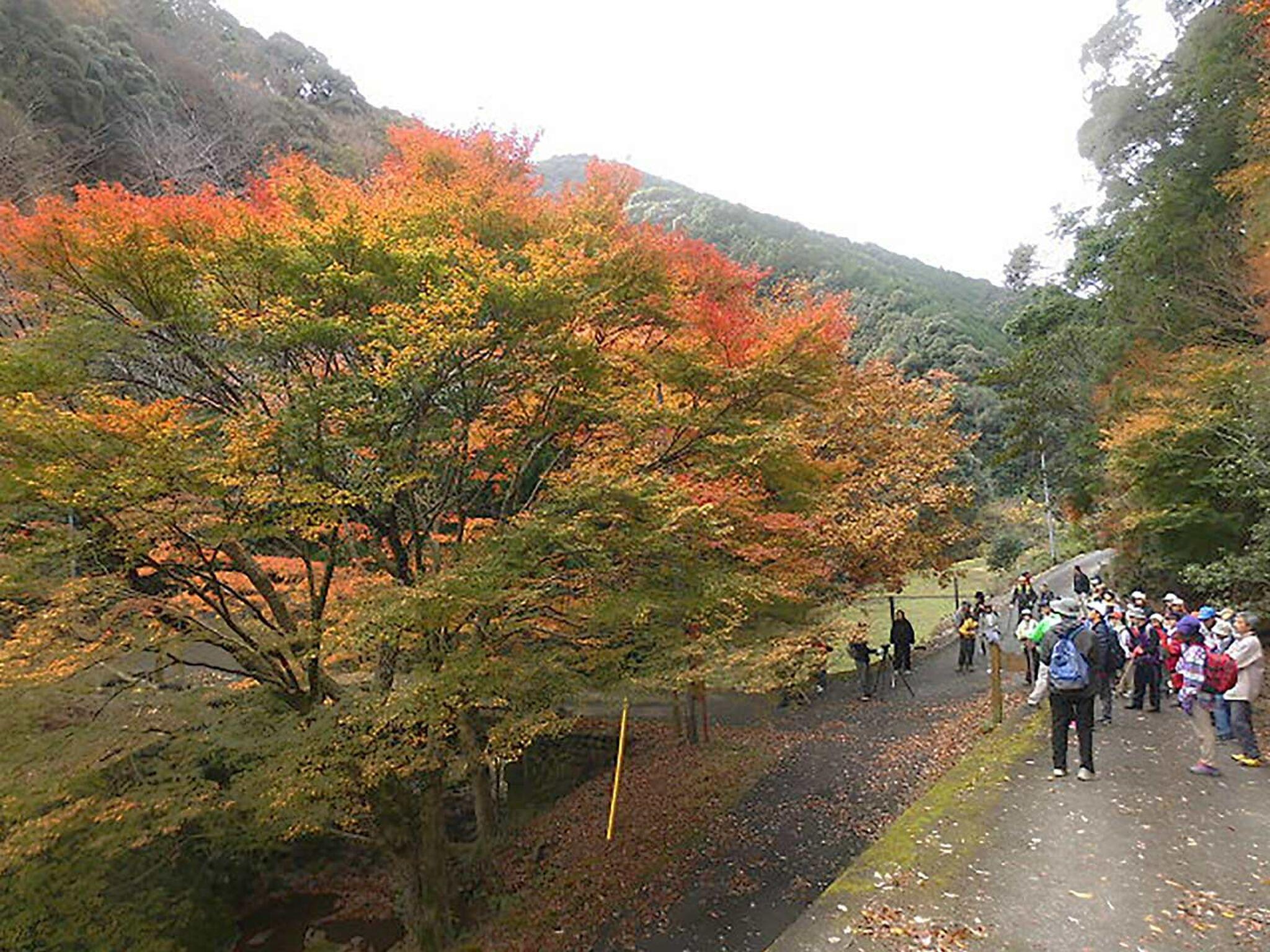 伊勢古道竜ヶ峠の画像